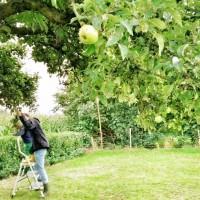 recept: appelmoes maken