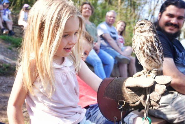 to do met kinderen in Saarburg: Roofvogelpark / Greifvogel Warsberg