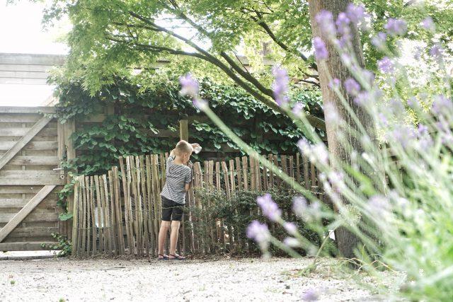 verwilderde tuin naar provencaalse tuin
