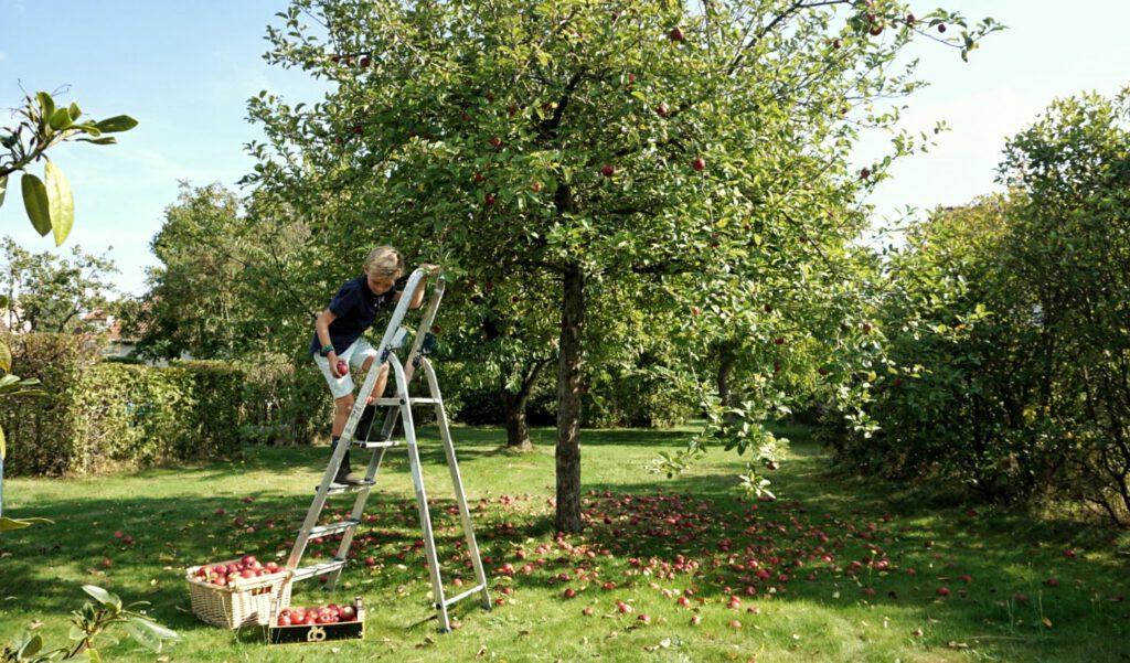 appelpluk herfstvakantie